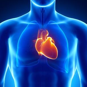 4 hábitos saludables que benefician al corazón y alargan la vida