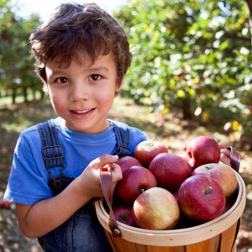 ¿Alimentos orgánicos o convencionales? El debate continúa…