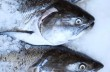 Fresh King Salmon on ice at a fish market.