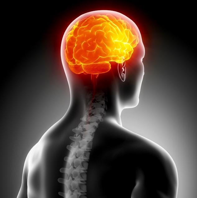 El ejercicio también beneficia tu cerebro
